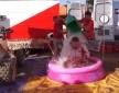 Rafal Sonik Ice Bucket Challenge z
