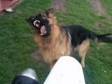 psy uwielbiaja supermoto z