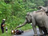 slonie atakuja motocykliste z