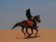 Jazda koniem na pustyni