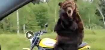 Uwaga zwierzęta na drodze, czyli wkurzony niedźwiedź motocyklista [FILM]
