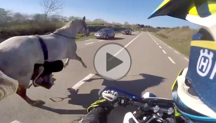 Fani Husqvarny znają się na koniach - motocyklista dawcą ... troski