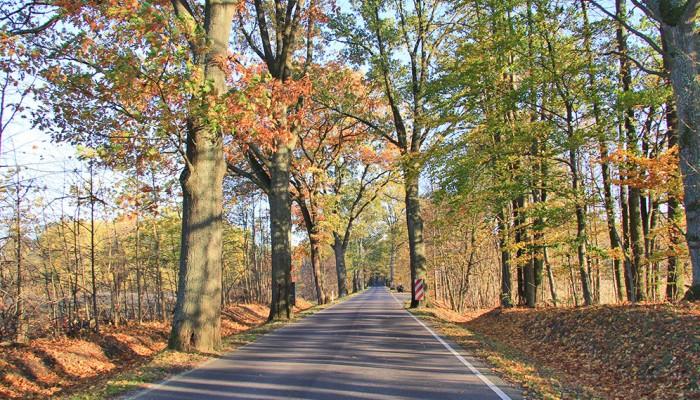 Sławne mazurskie aleje drzewne pod szczególnym nadzorem. Ważny projekt unijny