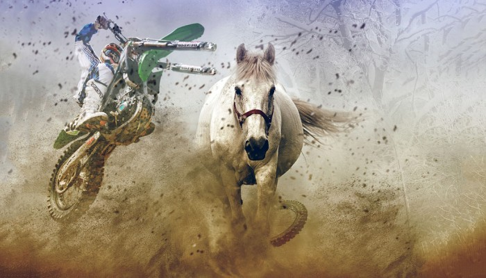Motocykl kontra koń. Jak się zachować, kiedy spotkasz konia na drodze lub w lesie?