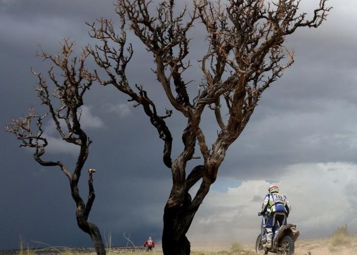 drzewo chmiry