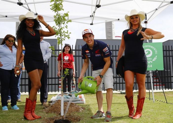 Marc sadzi drzewo