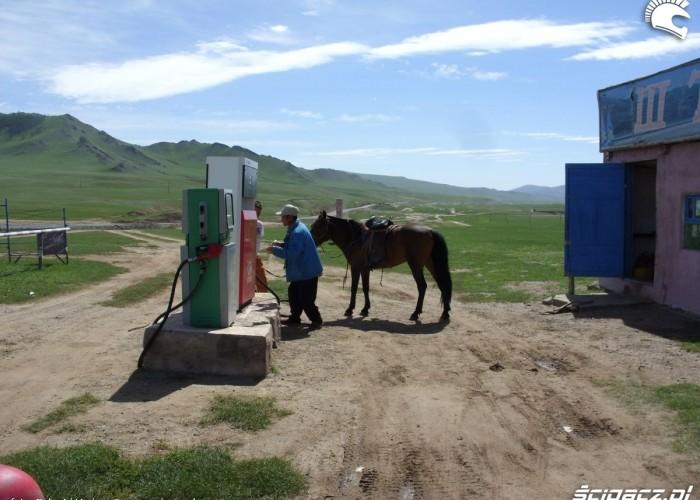 tankowanie konia