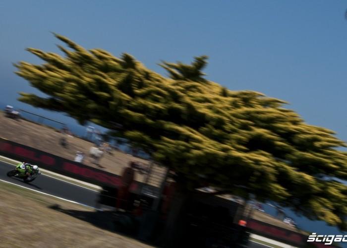 Lascorz drzewo