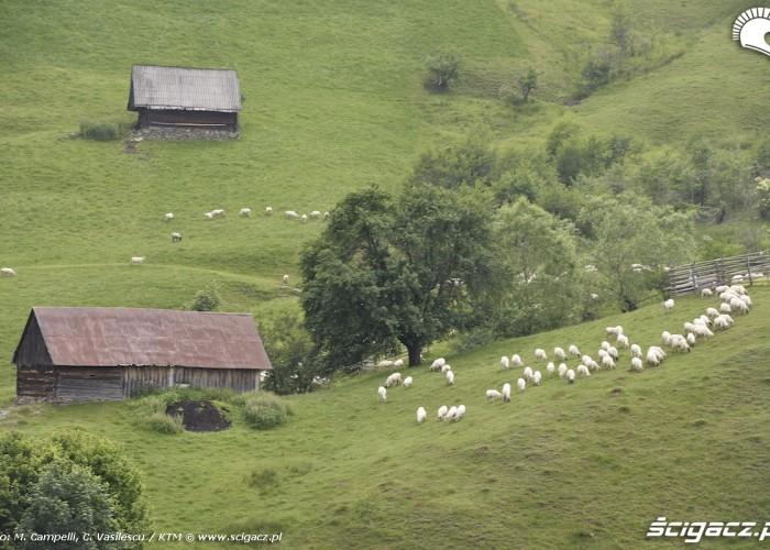 karpaty rumunia owce
