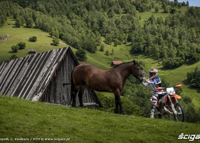 rumunia konie ktm