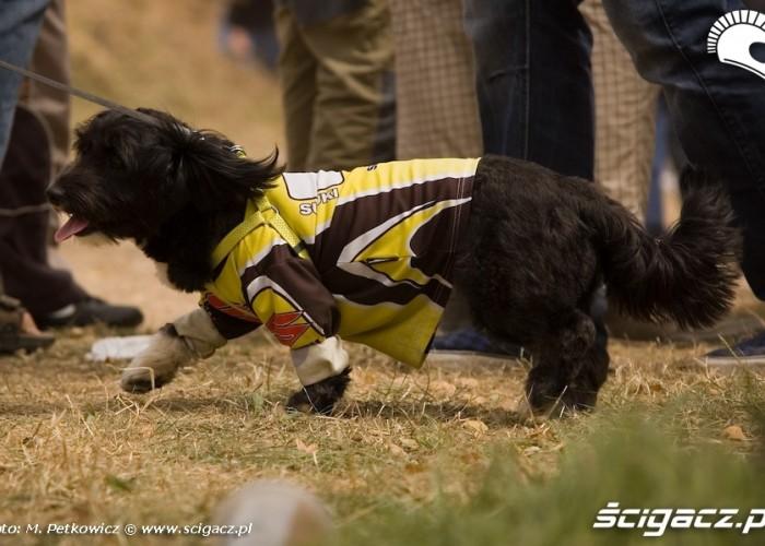 pies suzuki dog koszulka