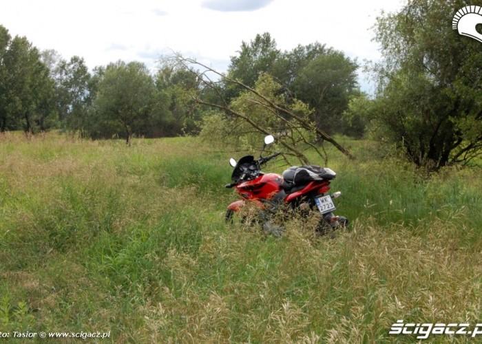 CBF w trawie