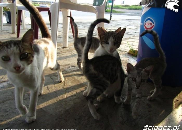 50 kocie powitanie w Grecji