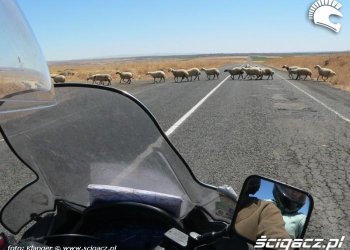 owce skuterem do turcji
