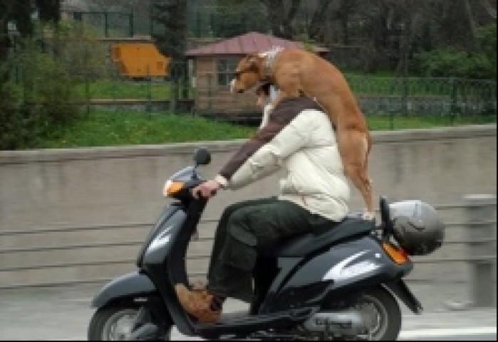 skuter dla kazdego