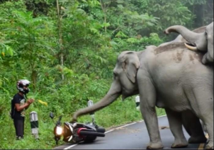 slonie atakuja motocykliste