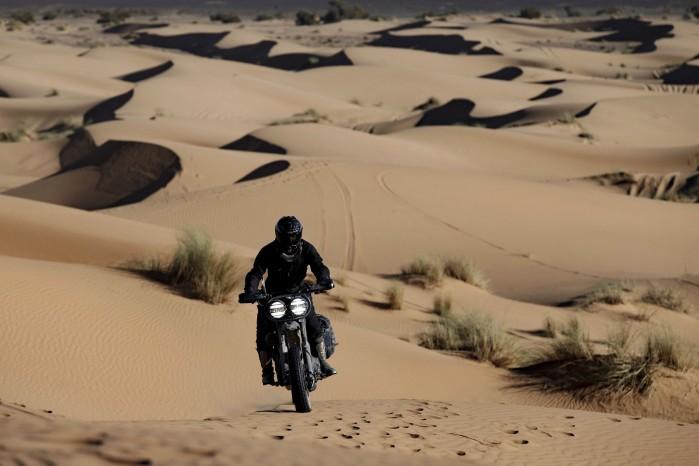 pustynny wilk H D