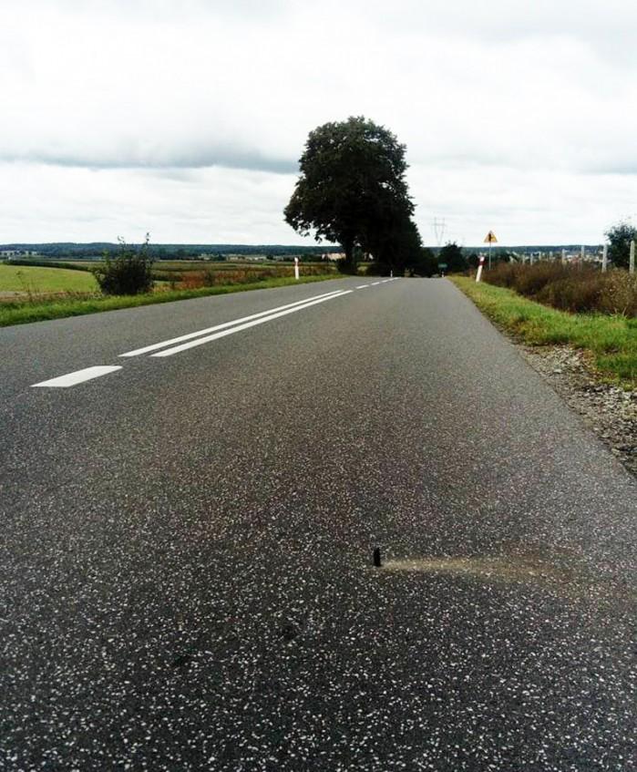 pulapka na drodze