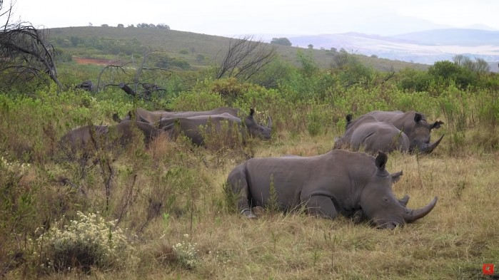 nosorozce Motul RPA