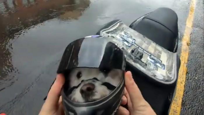 Pies w kasku
