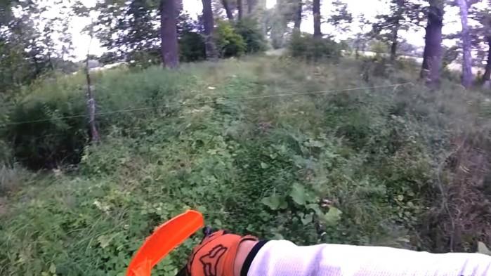 linka w lesie