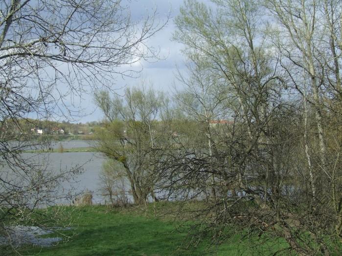 15 Widok na szeroko rozlana Wisle miedzy galeziami zarysy kosciola w Czerwinsku