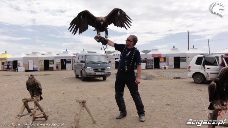 ujarzmianie ptaka