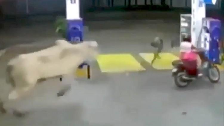 byk atakuje skuter na stacji benzynowej