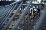 husky w szwecji za kratami