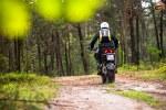 multistrada w lesie