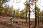 honda cb 500x w lesie