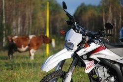 Krowa i koza czyli WR250R
