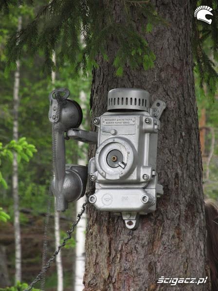 telefon na drzewie