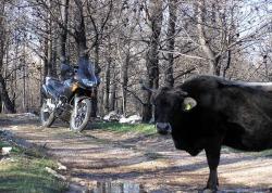 spotkanie w lesie